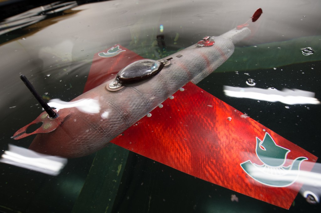 grace-robofish-top-view