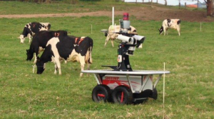 cow-robot